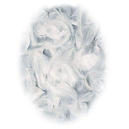 Blanc Coquille SAFU073706 (japon importation)