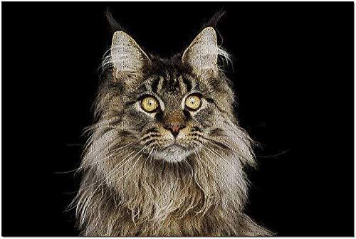 黒の背景に分離された巨大なメインクーン猫のHDクローズアップポートレート9017187(19x27の大人のためのプレミアム1000ピースジグソーパズル)