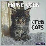 Maine Coon Kittens 2022 Calendar 16 Month: Official Maine Coon Cat Breed 2022 Calendar 16 Months
