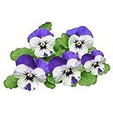 Fnho Perennes Semillas de Flores,Jardín Planta en Maceta perenne,Fantasía Tricolor, Patio Easy Live flower-100 cápsulas