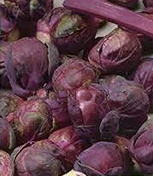 vegherb 5G / 100 Samen der Rosenkohl Rosella