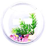 Lovelegis Wandaquarium - Glasfisch - Vase - Wandgestaltung - Hydrokulturpflanzen - 15 cm - im Fernsehen zu sehen -...
