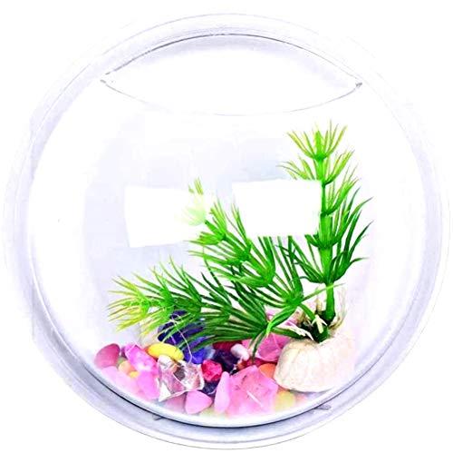 Lovelegis Wandaquarium - Glasfisch - Vase - Wandgestaltung - Hydrokulturpflanzen - 15 cm - im Fernsehen zu sehen - Weihnachts- und Geburtstagsgeschenkidee