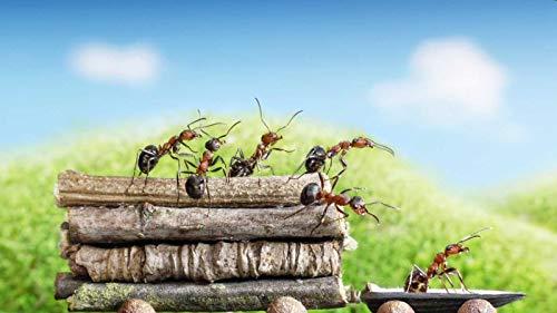 Puzzle 1000 Piezas de Madera Rompecabezas   Hormigas Closeup Ramas Animales Fondos de Pantalla (Puzzle Rompecabezas, Arte, Niños y Adultos, 750 mm)