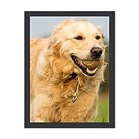 INOV 犬 ペット 動物 レトリーバー 球 分野 走ること アートパネル 壁掛け インテリア アートフレーム おしゃれ 絵画 額入り ブラックフレーム付き 部屋 壁面 30x40cm