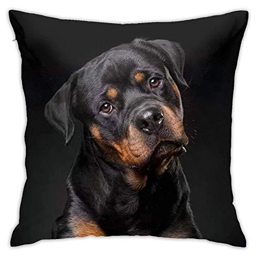 Spring Throw Pillow Covers Rottweiler & uml; C Loving Confident and Loyal Throw Pillow Cover Funda de almohada decorativa Decoración para el hogar Funda de almohada cuadrada de 18 x 18 pulgadas