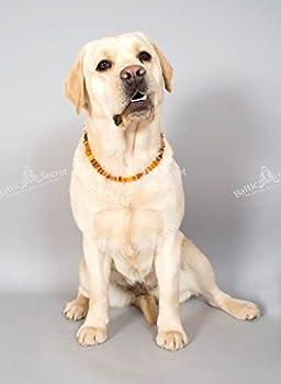 Baltic Secret Collier pour chien et chat 100% ambre véritable – Protection naturelle contre les tiques – Toutes les tailles