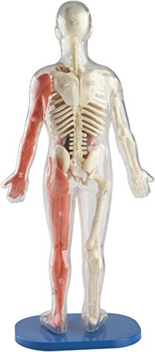 """SmartLab 06428 Squishy Human Body Toys Body-29 Pieces-21 Removable Parts-Includes Illustrated Anatomy Book and 12"""" Model, Multicolor, Standard"""