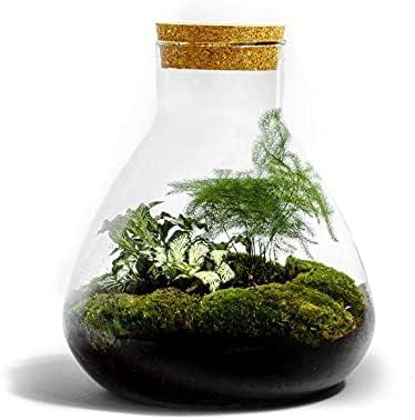 129 opinioni per DIY Giardino in bottiglia Sostenibile: Erlenmeyer Medio – Botanisch