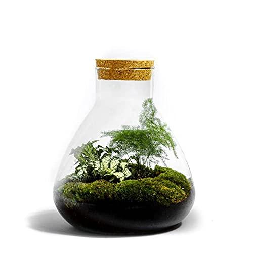 Kit pour terrarium