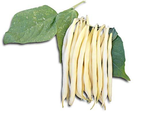 HARICOT nain à gousses jaunes - BEURRE ROCQUENCOURT - 75 grammes