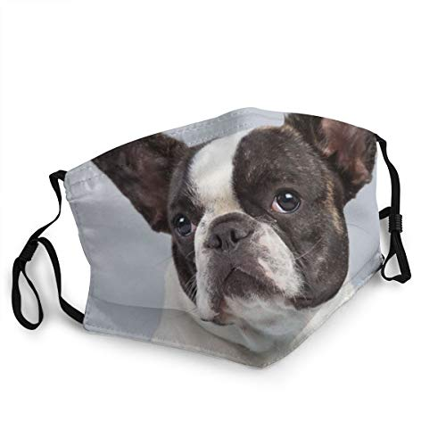 Brindle Pied French Bulldog Breathable Face Mask Reusable Mouth Cover Anti Dust Face Cover Balaclava for Women and Men