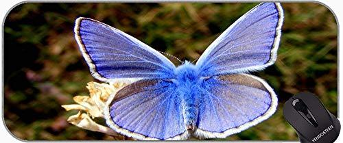 Alfombrilla de ratón antideslizante, mariposa común Jezabel Delias Eucaris insecto alfombrilla de ratón con bordes cosidos