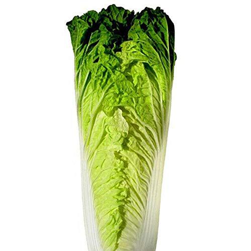 300g feuille de chanvre vert graines de chou feuille de chou mince goût bon et délicieux stockage d'hiver graines de base de graines de légumes-100G