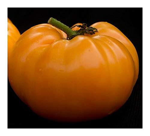 Tomate Kelloggs Breakfast - Heirloom tomate orange - 50 graines