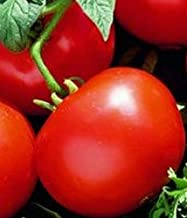Oregon Spring Tomato Seeds (20 Seed Pack)