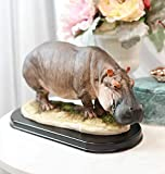 "Ebros Sub Saharan African River Common Hippopotamus Statue On Black Gallery Base 11.25"" Long Realistic Hippo Animal Taxidermy Figurine"