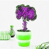 enticerowts - semi di cactus rari per piante grasse, decorazione per casa, ufficio, tavolo bonsai per coltivare le tue splendide piante, colore: blu raro semi di cactus