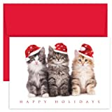 3 cats seated in row, Christmas hats