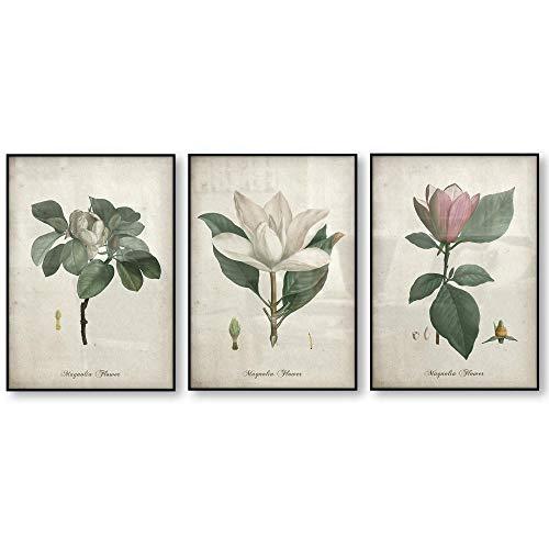 Botanico Tela Stampe Magnolia Fiore Vintage Parete Arte Quadro Vintage Poster antiquariato Arte Decorazioni Quadri Soggiorno Camera Quadro 40X60cmx3 No incorniciato