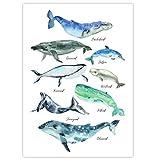Pandawal Kinderzimmer Deko Wale Poster Wasserfarbe Bilder