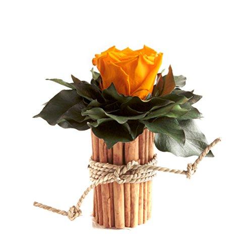 ROSEMARIE SCHULZ Heidelberg Blumengesteck mit Zimtbecher und 1 Rose konserviert haltbar 3 Jahre Rosengesteck/Blumengesteck/Landhaus/Blumen Deko (Gelb)