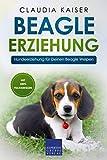Beagle Erziehung: Hundeerziehung für Deinen Beagle Welpen