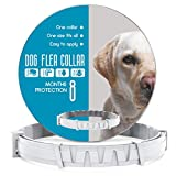 Dog Collar 8 Months Protection Adjustable
