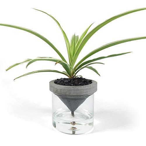 Greenology HKSGDA金賞受賞 デザイナーズ 自動給水型 植木 鉢 (LARGE)