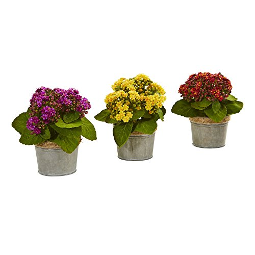 Nearly Natural Kalanchoes (Set of 3), 3 Piece