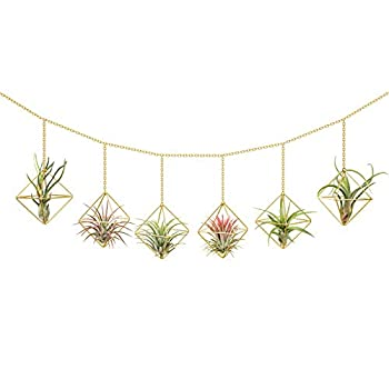 Dahey 6 Pcs Hanging Air Plant Holder Mini Metal Airplant Rack Hanger Modern Himmeli Geometric Planter Tillandsia Air Fern Display Stand with Chains for Home Office Decor Wedding Ornament,Gold