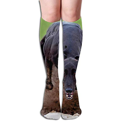 SDFGSE Tube High Keen Sock Boots Crew Greyhound Compression Socks Long Sport Stockings