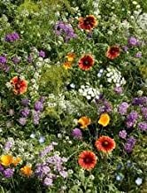 The Dirty Gardener Dryland Wildflower Seed Mix - 1 Pound