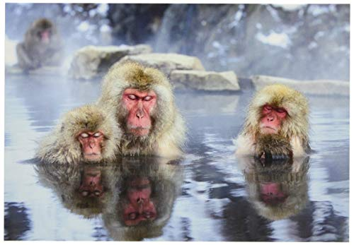 ピンナップ ポストカード 10+1枚 FK15 ニホンザル 家族 地獄谷温泉 写真 福田幸広