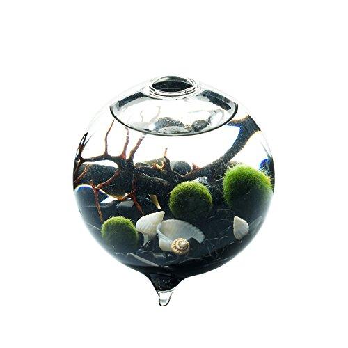 EssenceLiving Vaso in Vetro con Piede 3Palline Marimo Nero Ghiaia di Ossidiana Veri Fan Coral in Miniatura Acquario Decorazione della casa o Ufficio scrivania