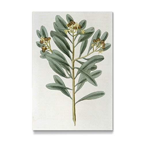 artboxONE Galerie-Print 30x20 cm Zimtpflanze hochwertiges Acrylglas auf Alu-Dibond Bild - Wandbild von Culture Images