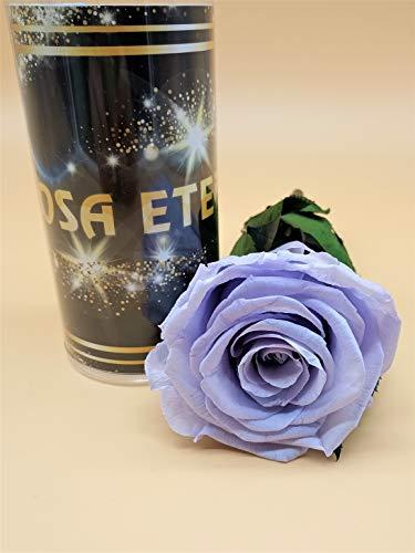 Ewige Rose Lavendel Extra –...