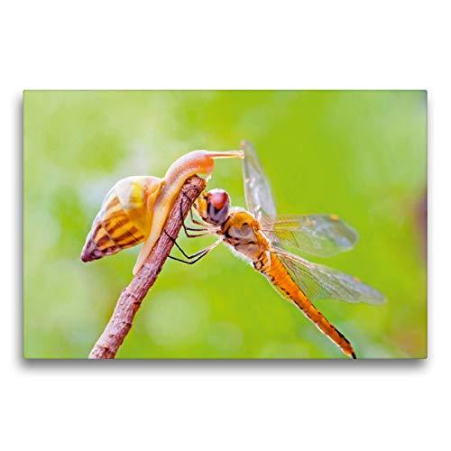 CALVENDO Premium Textil-Leinwand 75 x 50 cm Quer-Format Hallo Schnecke! Libelle und Schnecke streiten um einen Top Spot, Leinwanddruck Verlag