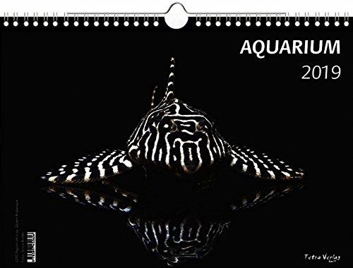Kalender Aquarium 2019 - Großformat 29,7 x 42 cm (A3) - 12 Fotografien von faszinierenden Aquarienbewohnern - 1 Titelbild mit edlem separatem Folienblatt