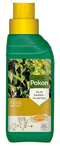 Pokon Fikus-Flüssigdünger, Spezialdünger für alle Fikuspflanzen, mit Extraportion Eisen, 250 ml