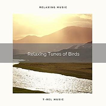 ! ! ! ! Relaxing Tunes of Birds