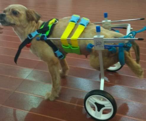 Silla de ruedas ajustable para perro,con altura de la cadera: de 20,32 cm a...