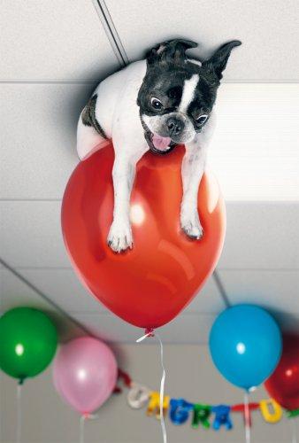 Avanti Karten - Humorkarte Geburtstagskarte Hund schwebt auf einem Luftballon 94-1047