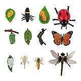STOBOK - Juego de 3 conjuntos de vida con números de mariposas, libélula, mariquitas, insectos, figuras de plástico, ciclo de crecimiento, juguete para niños de aprendizaje y aprendizaje