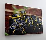 DesFoli Schlange Reptil Wald Natur Leinwand Canvas-Bild