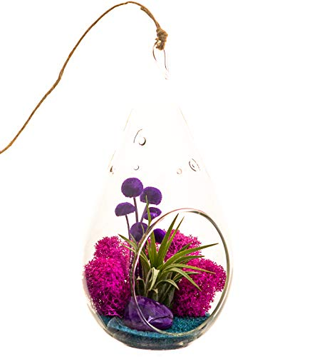 Bliss Gardens Air Plant Terrarium with Purple Agate - 7' Teardrop Glass - Turquoise Passion