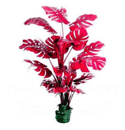 New Seeds 100 PC mischten Philodendron Samen Perfect Color Indoor Pflanzen Anti-Strahlung absorbieren Staub Baumsamen Gartenbonsai 23