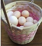 食用 烏骨鶏の卵 18個入り