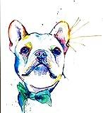 Xykhlj Perro de Color Blanco_DIY Pintura al óleo de por Números-Lienzo preimpreso-óleo Regalo para Adultos Niños Pintura por Numero Kits Decoración del Hogar_40x50cm Sin Marco