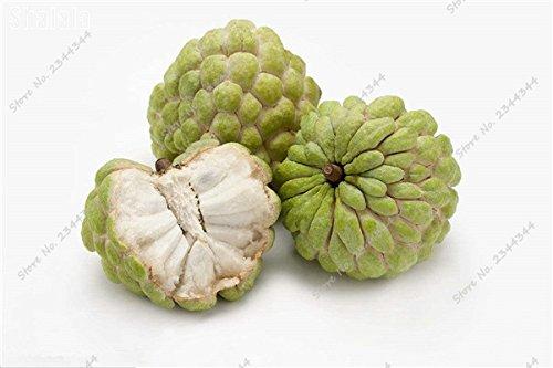 11pcs/sac de sucre exotique Graine extérieur ANNONA Squamosa Fruta tête Fruit de Bouddha bio Juicy Custard 12